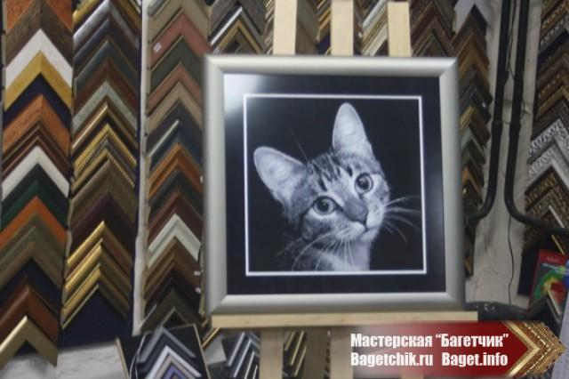 """Вышивка в багете """"Портрет Кошки"""""""